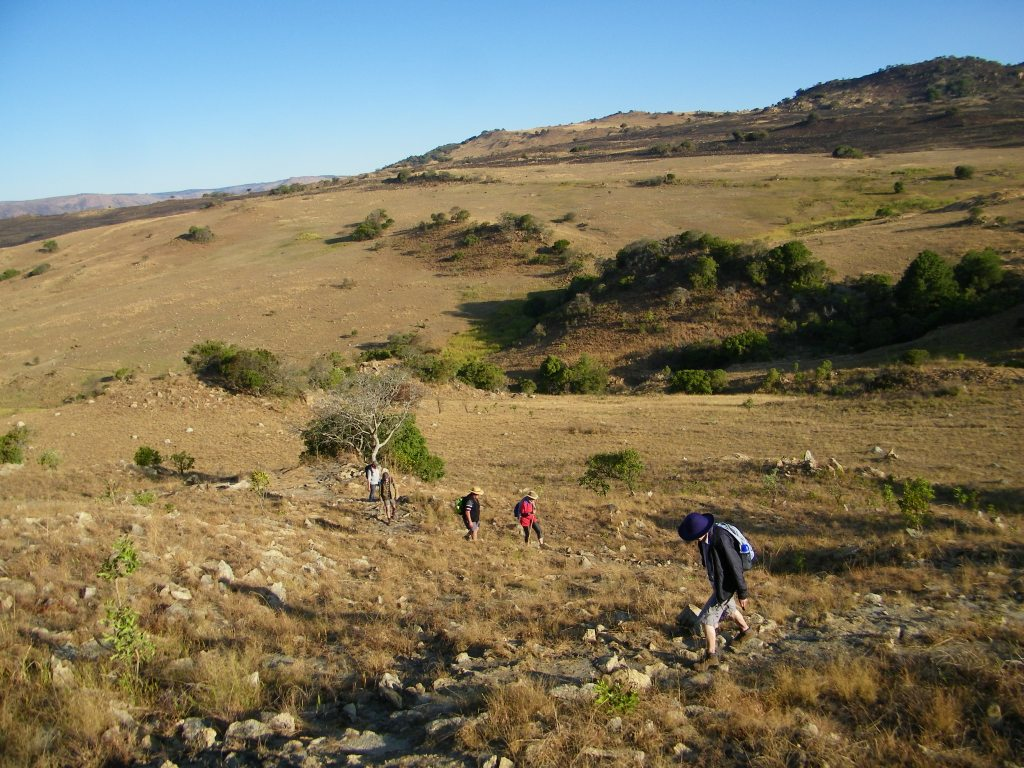 Blue Wildebees hike
